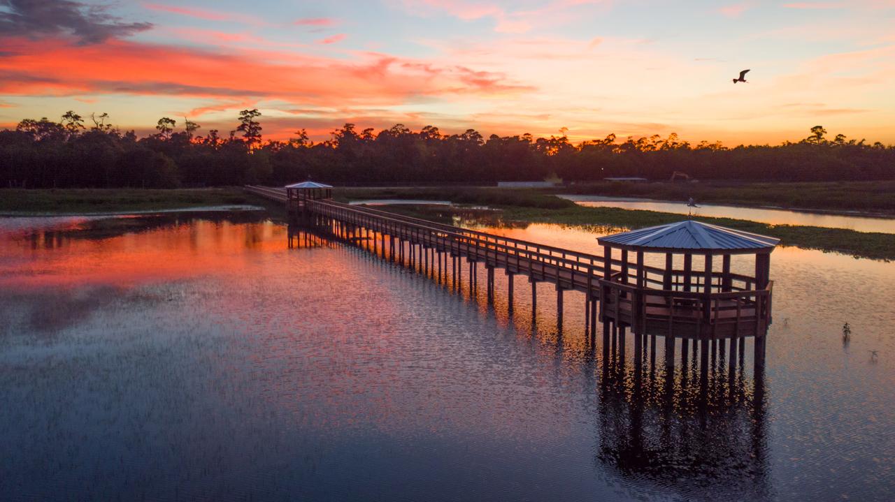 Cattail Marsh Scenic Wetlands Boardwalk Beaumont Tx