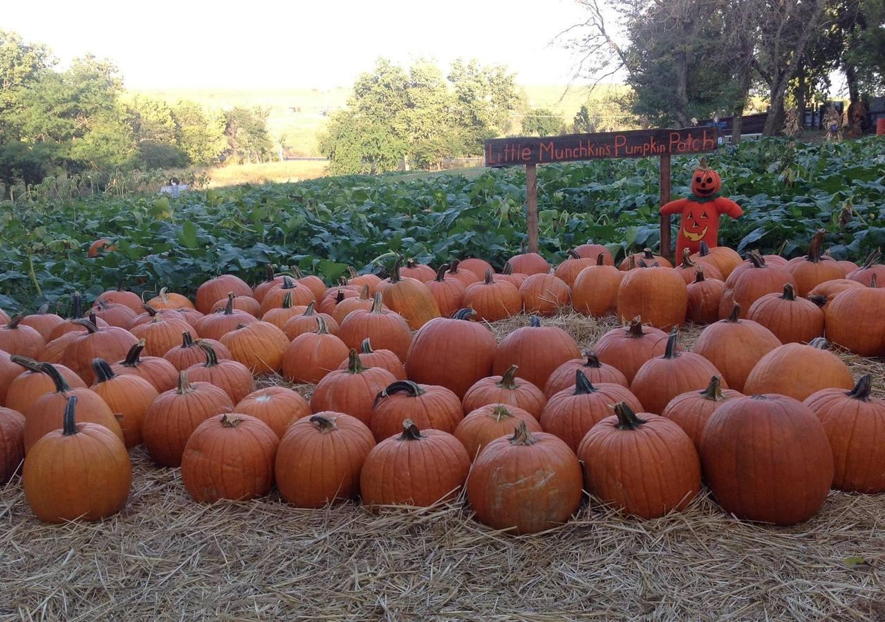 Sweet's pumpkin patch in hutchinson, ks.
