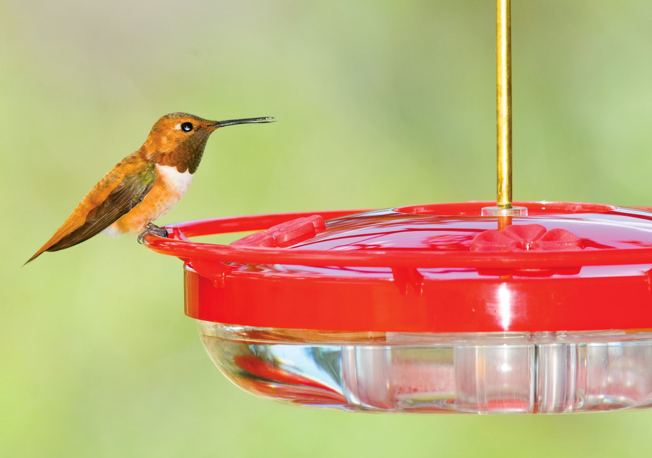 unlimited a the home now jd food is up feed mid good so journal your sources at bird feeders idea stocking winter albuquerque low run birds feeder