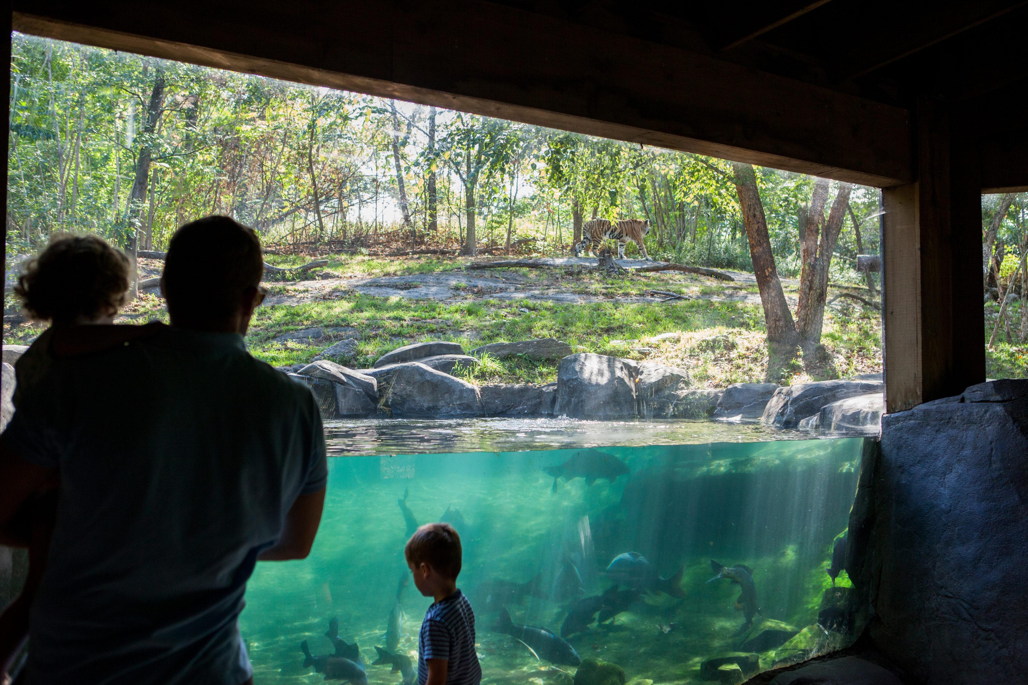 Bronx Zoo Bronx Ny 10460 New York Path Through History