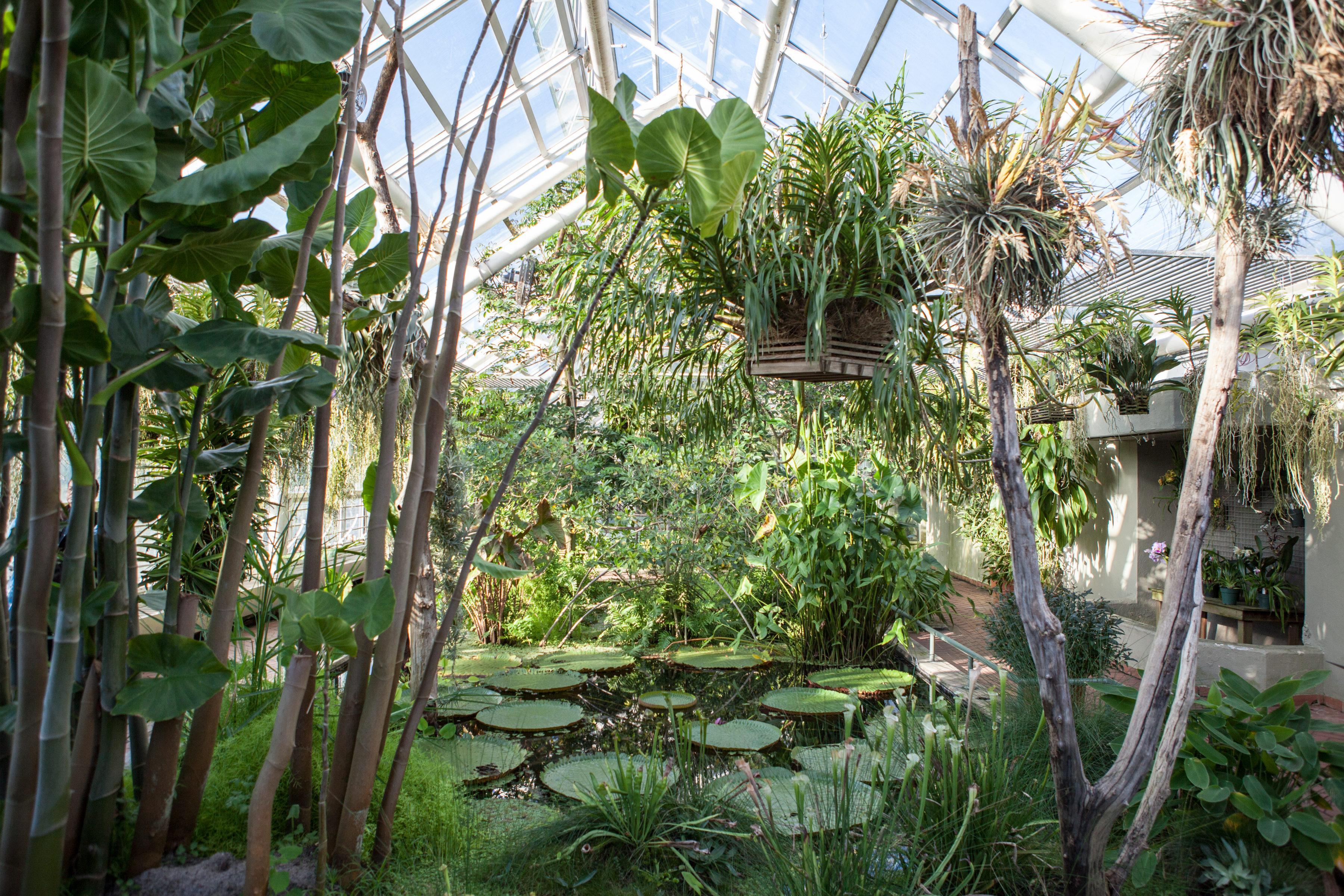 Brooklyn Botanic Garden Brooklyn Ny 11225 New York Path