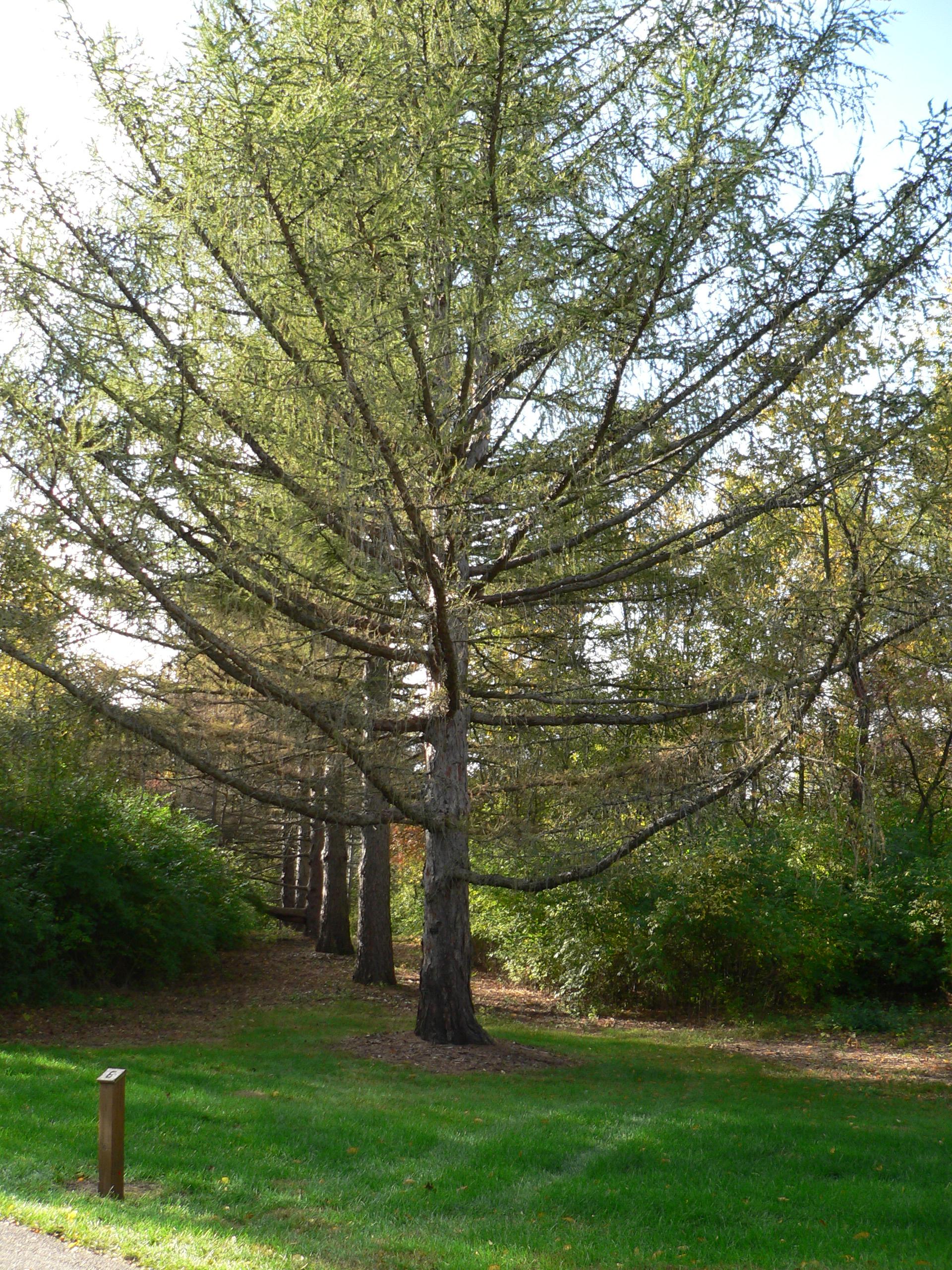 Klehm Arboretum and Botanic Garden