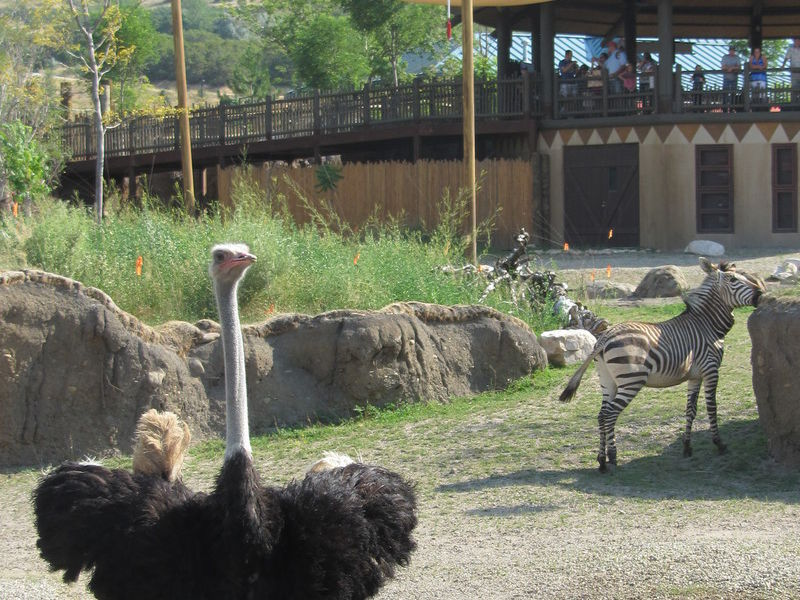 Utah\'s Hogle Zoo | Salt Lake City, UT 84108-1454 | Zoos & Gardens in ...