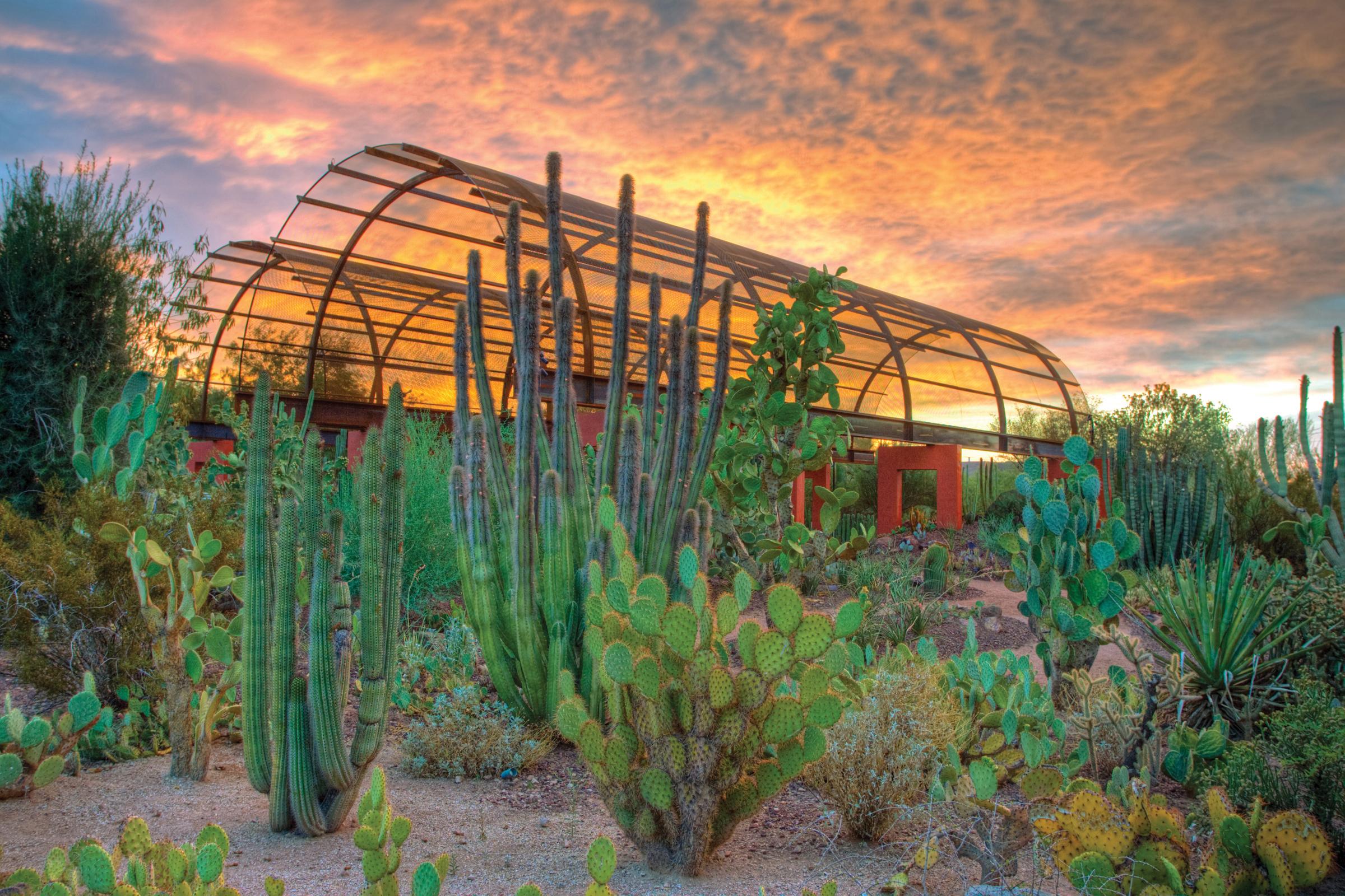 dbg cactus gallery 1 5f06745b5056b3a_5f067a8a 5056 b3a8 49398221e0979971jpg - Desert Botanical Garden