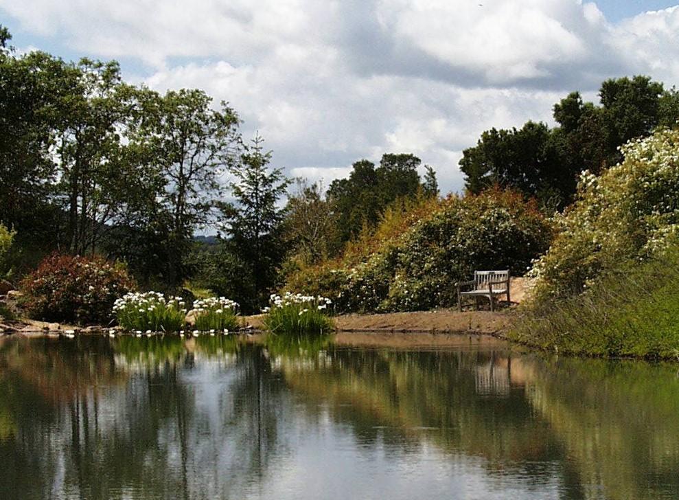 garden pond - Quarryhill Botanical Garden