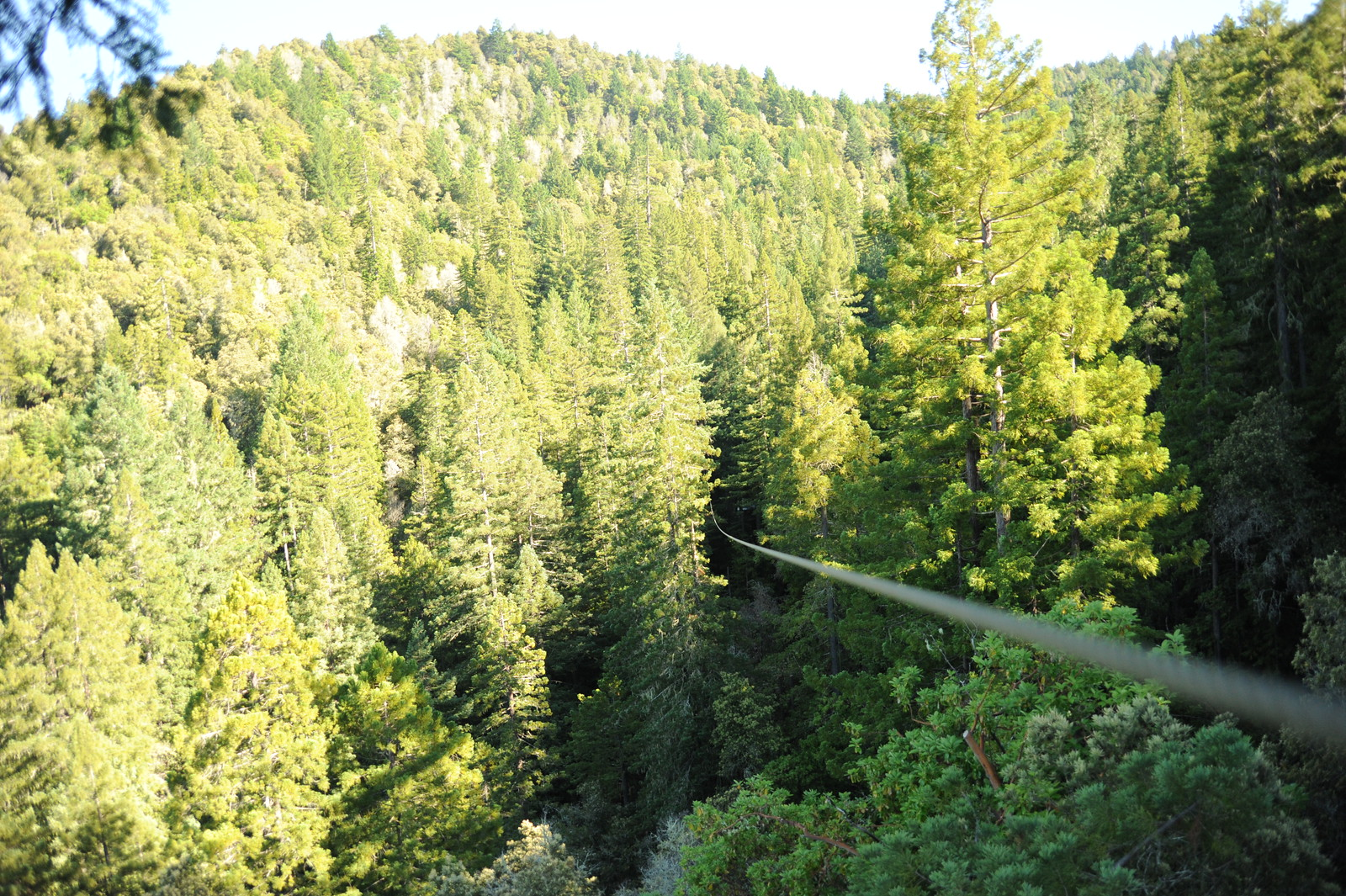 Sonoma Canopy Tours & Canopy Tours
