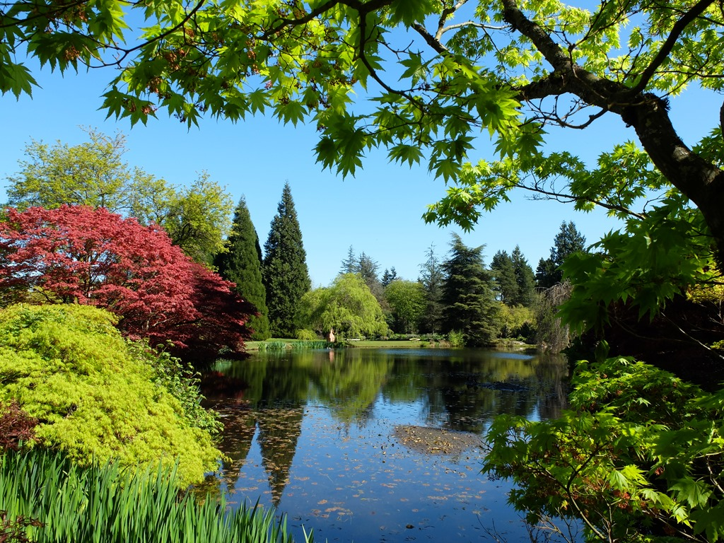 Attirant VanDusen Garden. Hummingbird. Laburnum. Heron Lake