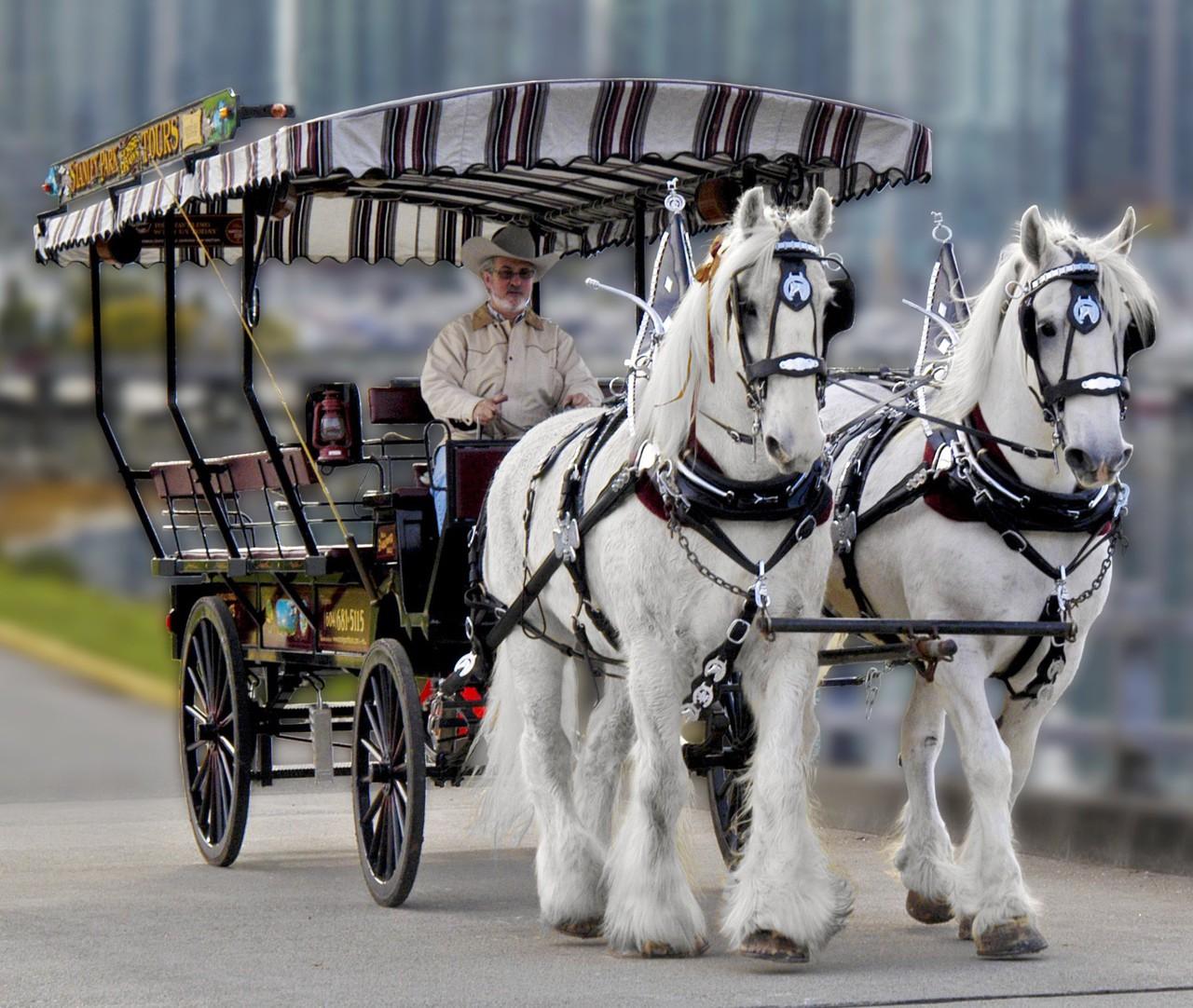 stanley park horse drawn tours