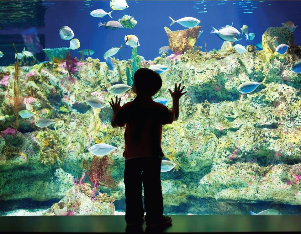 6591 64 Nc Aquarium At Ft Fisher Jpg