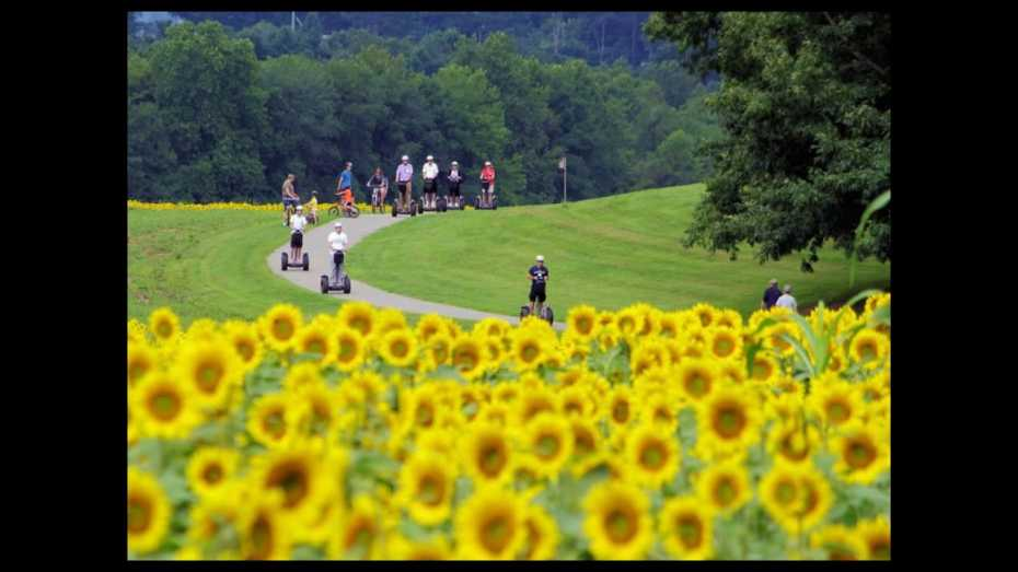 AAA Asheville - Summer Webinar