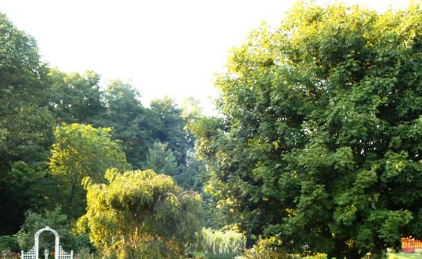 Garden-in-Hendricks-ib