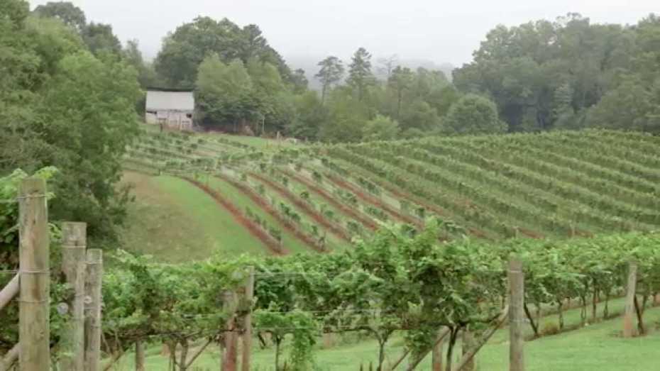 Jeff Frisbee   Addison Farms