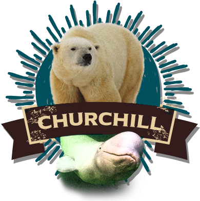 Greetings from Manitoba via Calm Air: Churchill