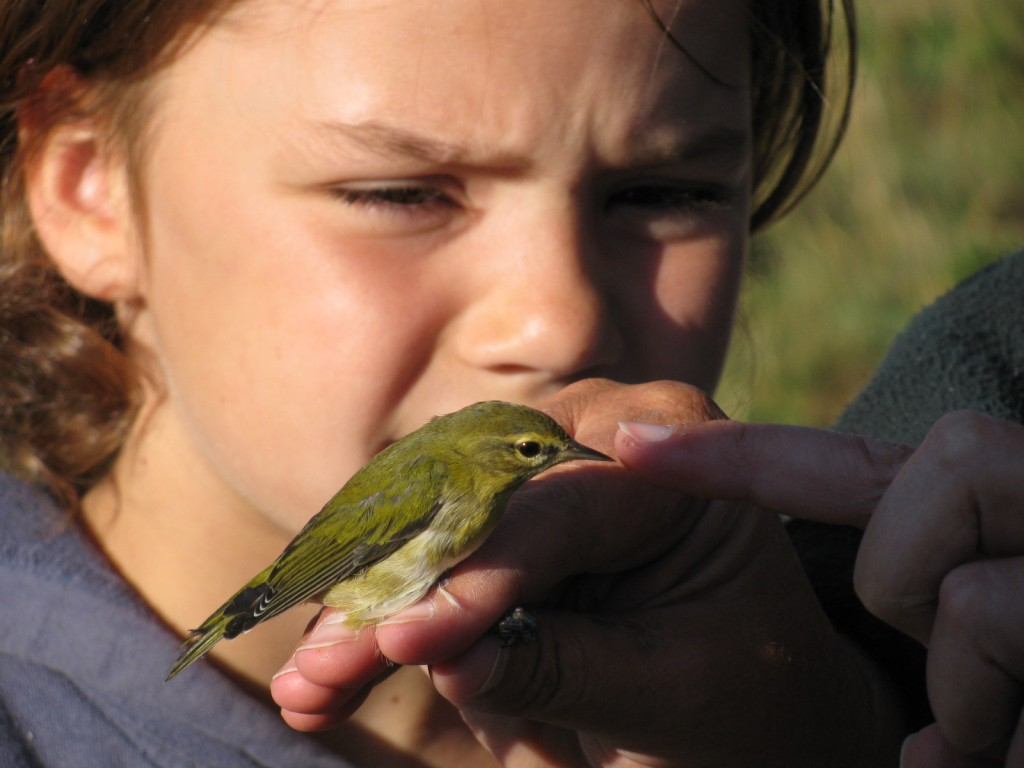 Bird banding Oak Hammock Marsh