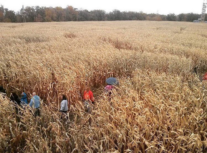 A Maze in Corn photo by @cateblc via Instagram.