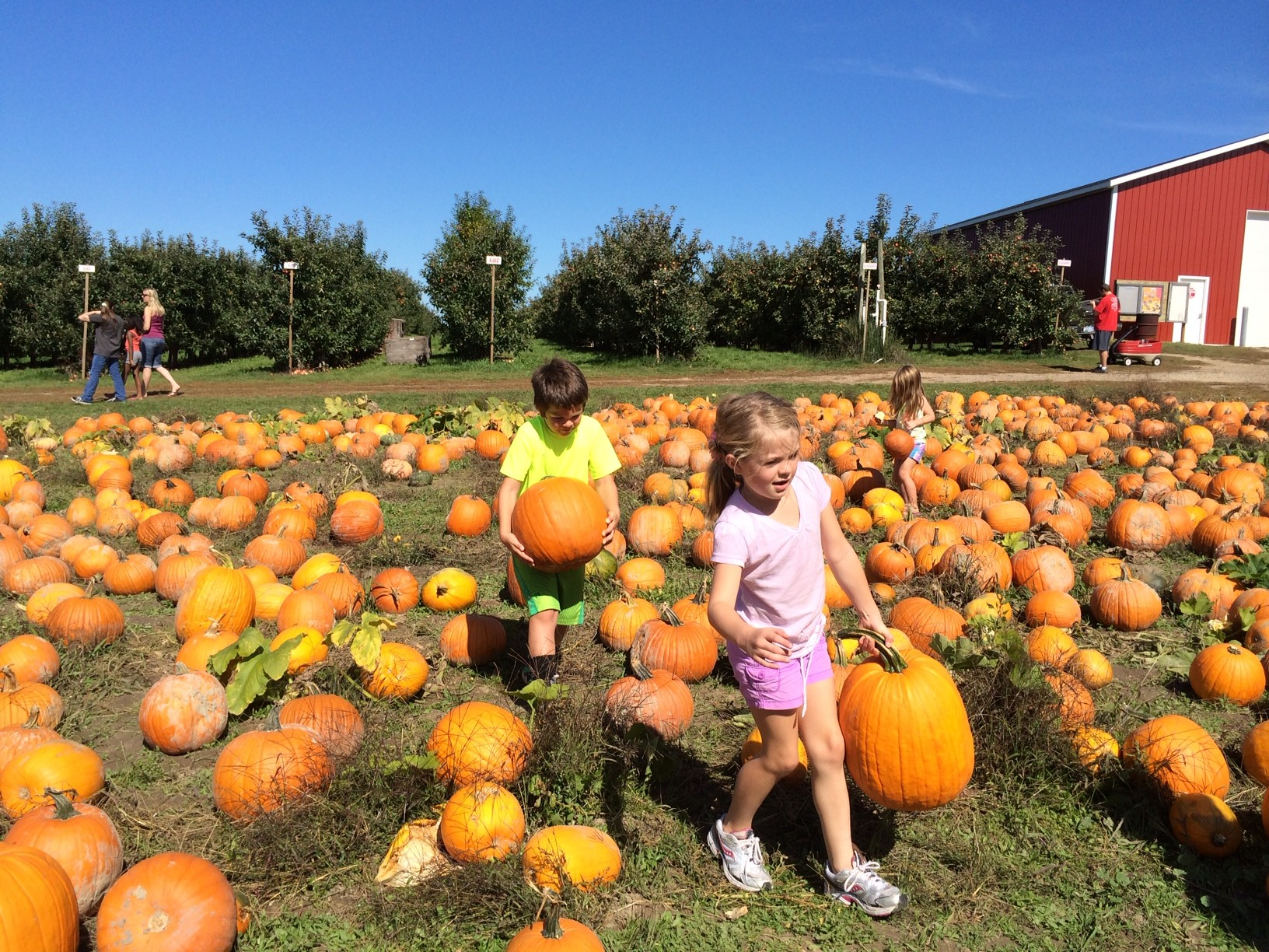 Kids Picking Pumpkins In Grand Rapids Michigan