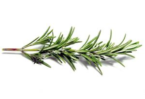 Rosemary for Black Bean Soup Recipe