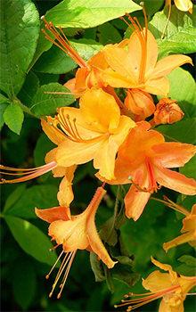 Asheville S Wildflower Bloom Schedule Outdoor Activities