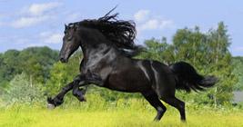 Michigan Horse Expo in Lansing, MI