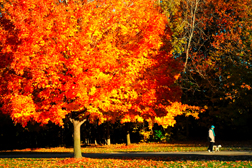 Fall in Greater Lansing