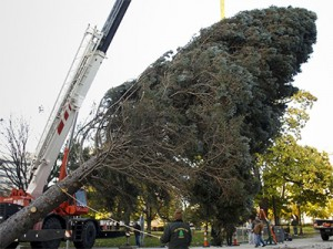 WooHoo! Here comes the State holiday Tree! The season is upon us kids!