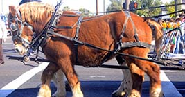 Come to the Great Laks International Draft Horse Show and Pull