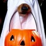 Lansing Halloween Events