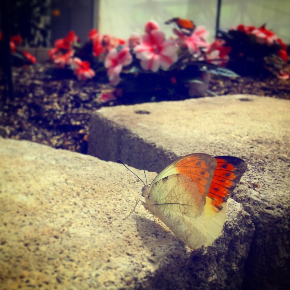Take mom to the Botanical Conservatory to see the live butterfly exhibit!