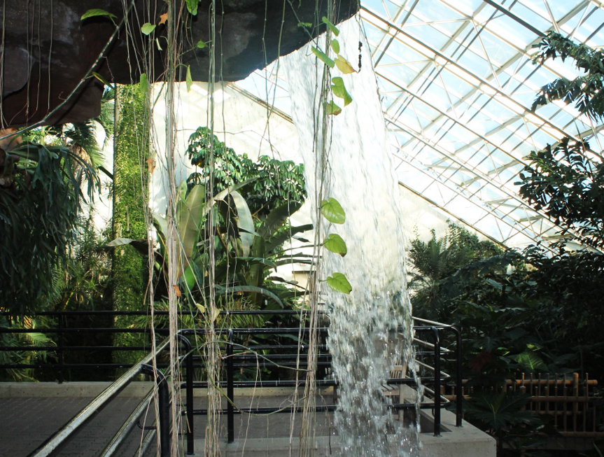 Explore the Botanical Conservatory