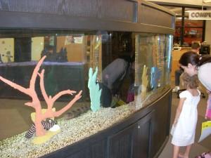 Fish at the Library