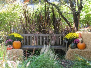 A restful bench, so you can sit and enjoy autumn!