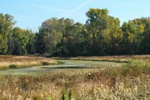 Eagle Marsh - Fall Program Guide