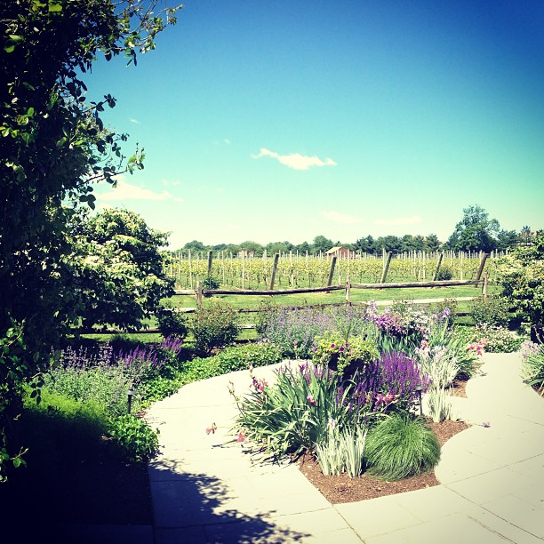 Captured by Instagram User @crossingvineyards