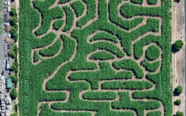 Vertuccio Farm's 7-acre corn maze. (Photo via facebook)
