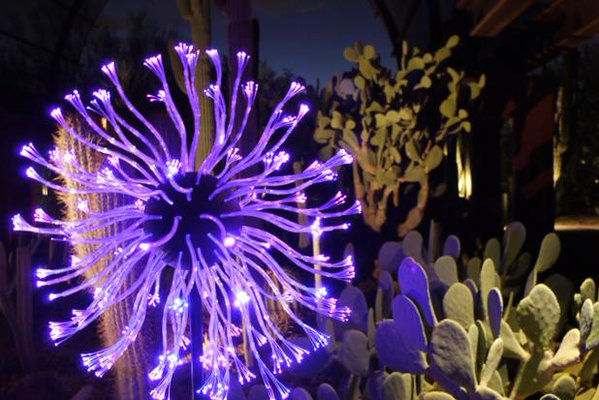 Bruce Munro: Sonoran Light (Photo by Desert Botanical Garden)