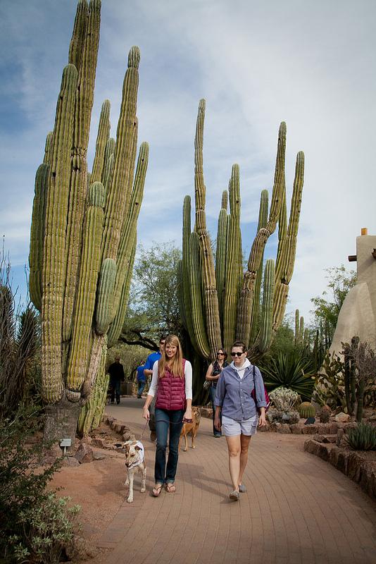 Dogs' Day at Desert Botanical Garden