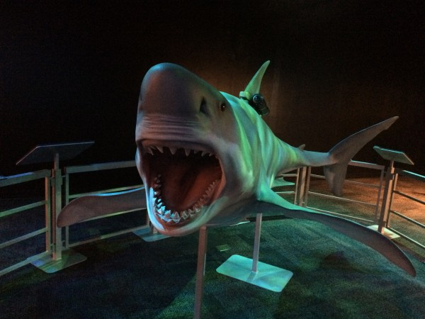 Great white shark Arizona Science Center