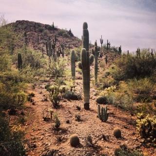 desert shot