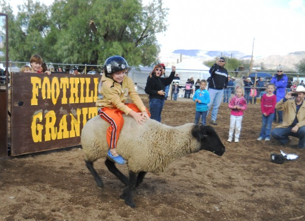 Mutton bustin' at Wild West Days