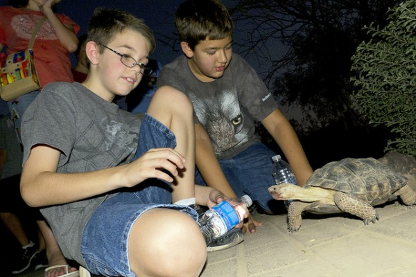 Desert Botanical Garden Flashlight Tour