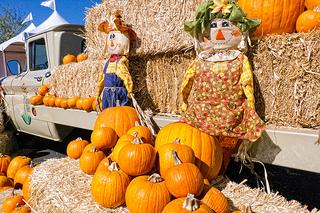 Great Pumpkin Festival at the Desert Botanical Garden