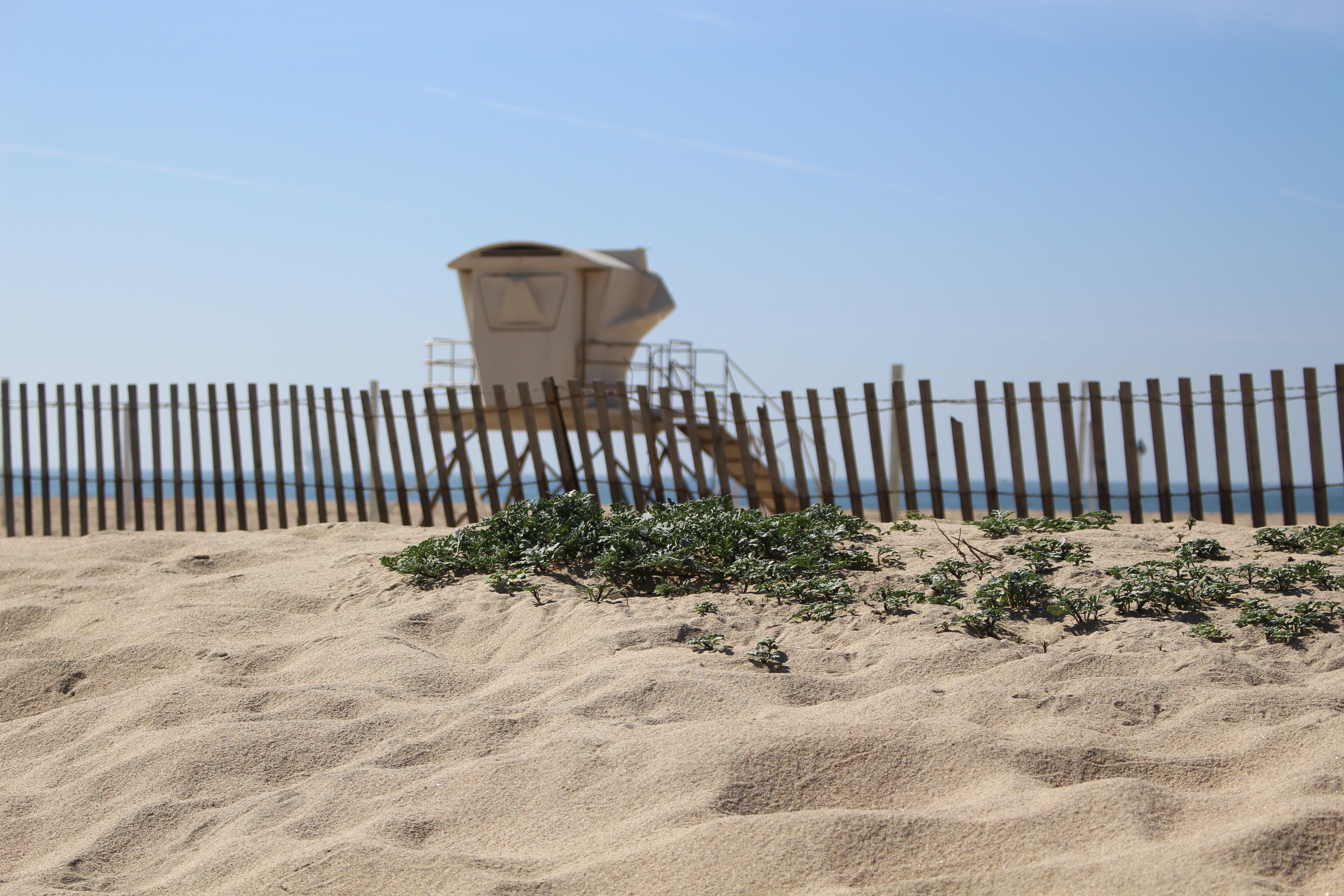 Huntington State Beach   Huntington