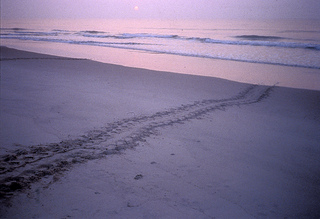 Tracks in the beach sand