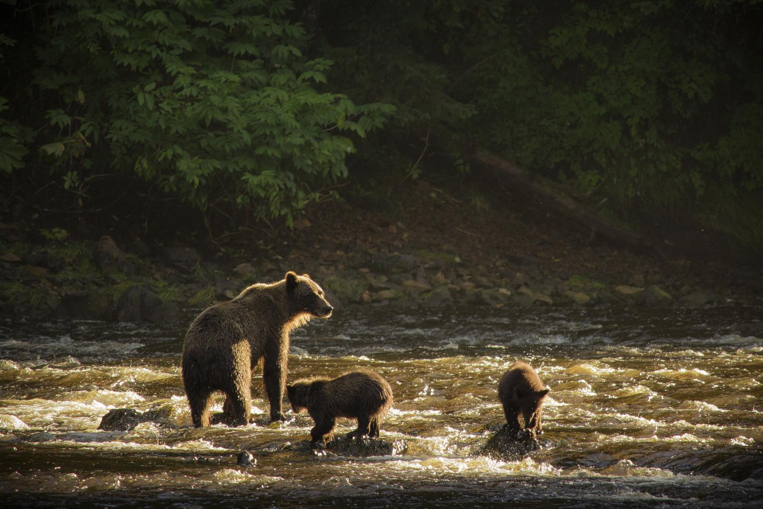 Bear Viewing On Admiralty Island Near Juneau Alaska Travel Juneau