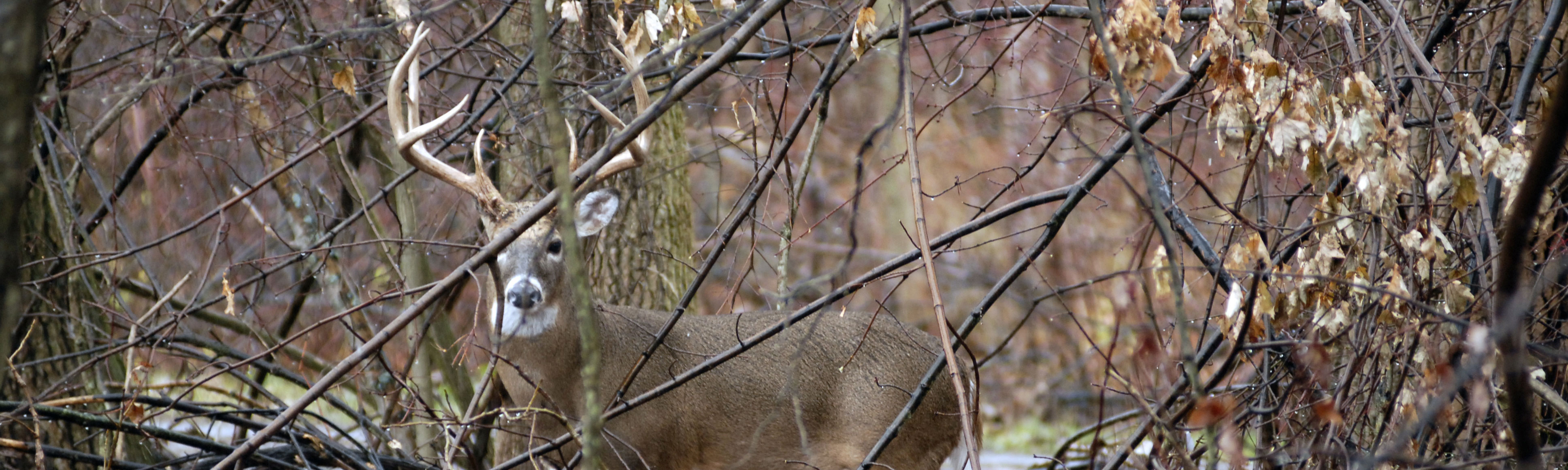 Hunting in New York | Find Info, Resources & Guides