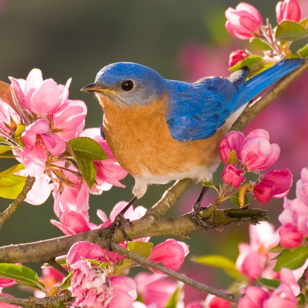 Birding In New York State Binoculars Species Of Birds