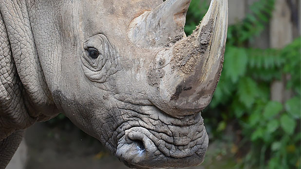 Rhino 2015 Photo by Marie Kraus Bill