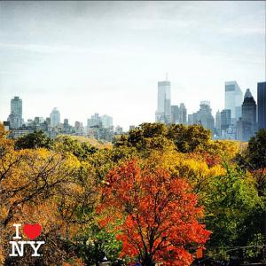 Foliage in NY