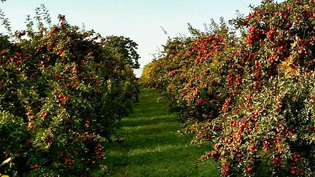 Apple Festival at Gould Orchards - Photo Courtesy of Goold Orchards