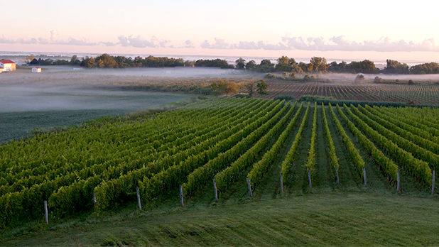 Foggy Morning vineyard - Photo Courtesy of Niagara Wine Trail